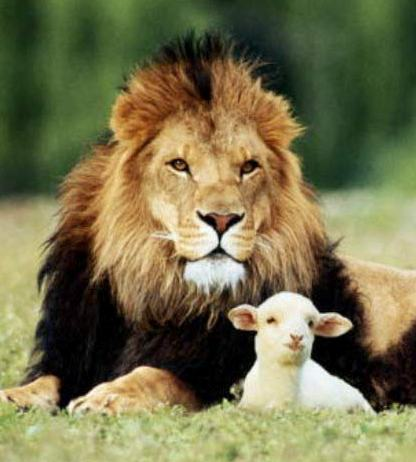 Clements 20181003 Lion and Lamb.jpg