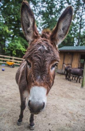 donkey-2-290x444.jpg